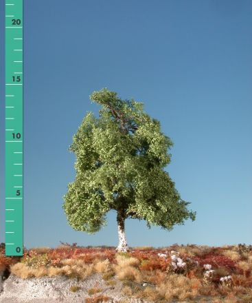 Silhouette Moorbirke - Sommer - 0 (< ca. 8cm) - N-Z (1:160-220) - (110-02)