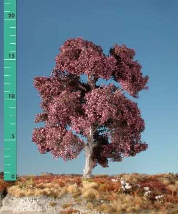 Silhouette Blutbuche - Sommer - 1 (ca. 10-13cm) - N-Z (1:160-220) - (122-12)