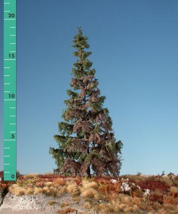 Silhouette Wetterfichte - Sommer - 0 (< ca. 8cm) - N-Z (1:160-220) - (173-06)