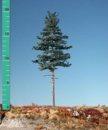 Silhouette Tanne Hochstamm - Sommer - 1 (ca. 10-13cm) - N-Z (1:160-220) - (177-12)