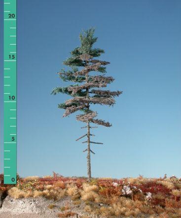 Silhouette Wettertanne Hochstamm - Sommer - 1 (ca. 10-13cm) - N-Z (1:160-220) - (177-16)