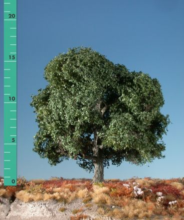 Silhouette Eich - Sommer - 1 (ca. 10-13cm) - N-Z (1:160-220) - (180-12)