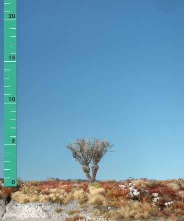 Silhouette Kopfweide - Kahl - 0 (< ca. 8cm) - H0 (1:87) - (241-00)
