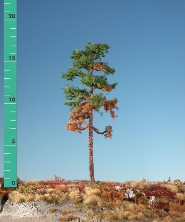 Silhouette Wetterwaldkiefer - Sommer - 3 (ca. 22-29cm) - H0 (1:87) - (270-36)