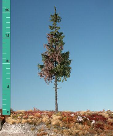 Silhouette Wetterfichte Hochstamm - Sommer - 3 (ca. 22-29cm) - H0 (1:87) - (274-36)