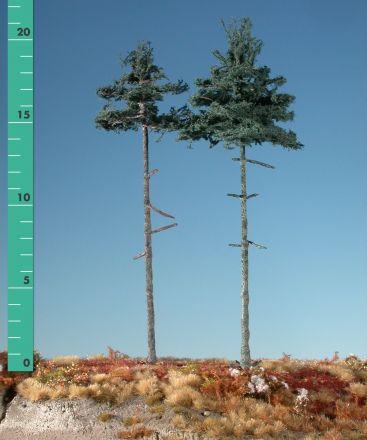 Silhouette Innenwald-Tanne - Sommer - 3 (ca. 22-29cm) - H0 (1:87) - (278-32)