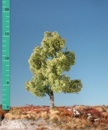 Silhouette Moorbirke - Frühling - ca. 57cm - 0-1 (1:45+) - (310-51)