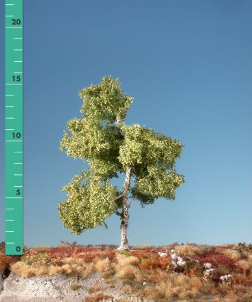 Silhouette Moorbirke - Frühherbst - ca. 57cm - 0-1 (1:45+) - (310-53)