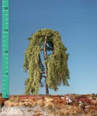 Silhouette Hängebirke - Sommer - ca. 57cm - 0-1 (1:45+) - (311-52)