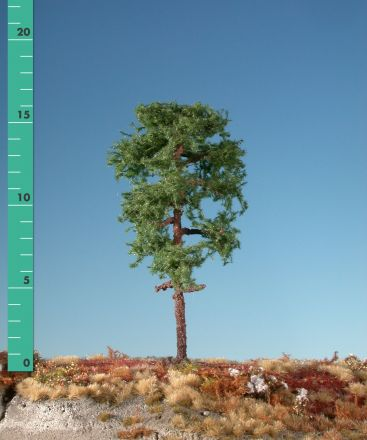 Silhouette Waldkiefer - Sommer - ca. 50cm - 0-1 (1:45+) - (370-52)