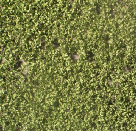 Silhouette Birkenlaub - Sommer - ca. 15x4cm - H0 (1:87) - (910-22S)
