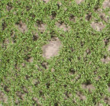 Silhouette Pappellaub - Sommer - ca. 15x4cm - N-Z (1:160-220) - (913-12S)
