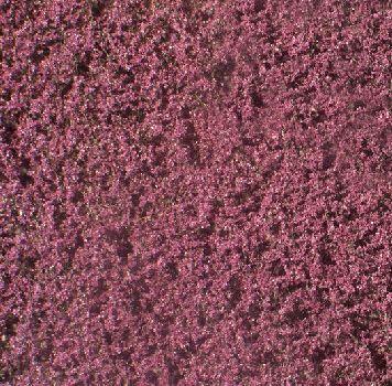 Silhouette Blutbuchenlaub - Sommer - ca. 15x4cm - N-Z (1:160-220) - (922-12S)
