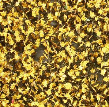 Silhouette Ahornlaub - Spätherbst (gelb) - ca. 63x50cm - H0 (1:87) - (930-24G)